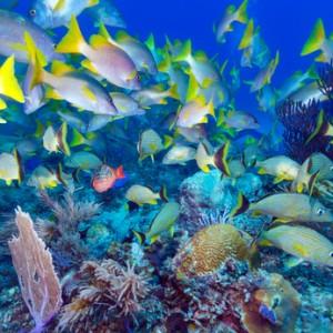 Die faszinierende Unterwasserwelt an den Korallenriffen © Rostislav Ageev - Fotolia.com