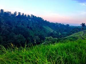 Der Dschungel-Wald rund um Ubud